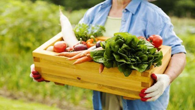 Alimentos orgânicos, orgânicos, alimentação orgânica, maternidade hoje
